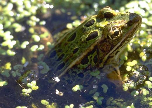 青蛙手绘生长图
