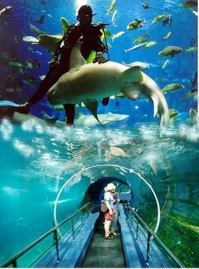 幼儿园海洋世界河马