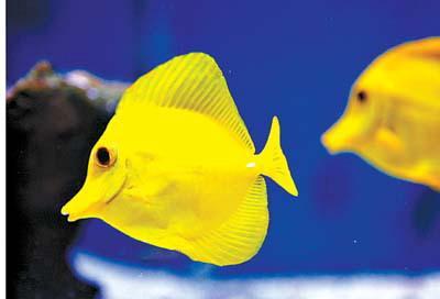 废品手工制作海底动物