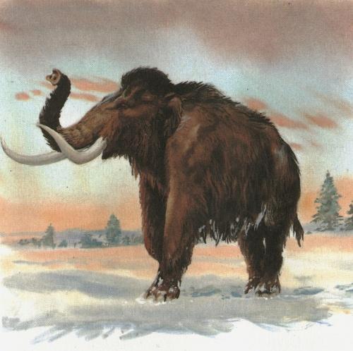 曾是世界上体型最庞大的动物之一,约1万年前猛犸象陆续灭绝,这被视作