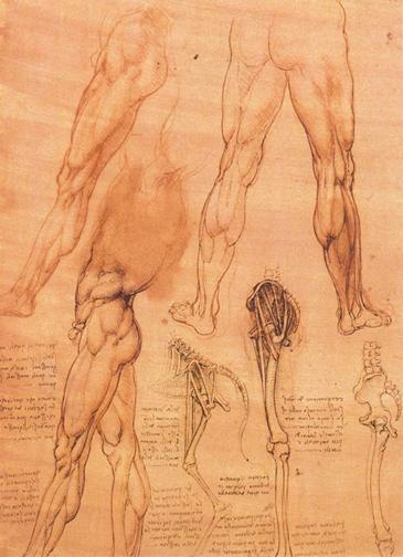 达芬奇人体解剖图