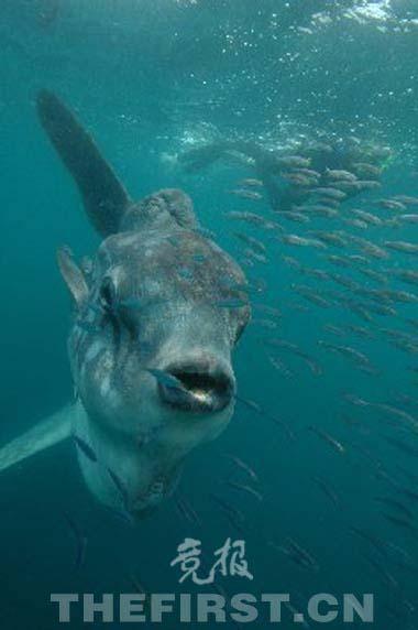 海洋动物 - 搜狗百科