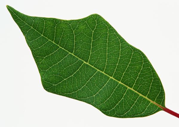 树叶拼成动物图片