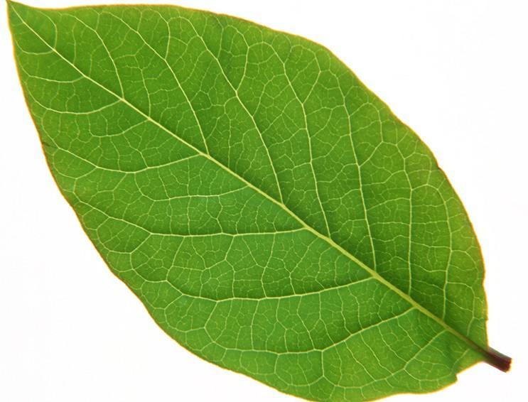 树叶 叶片�... L Is For Leaf