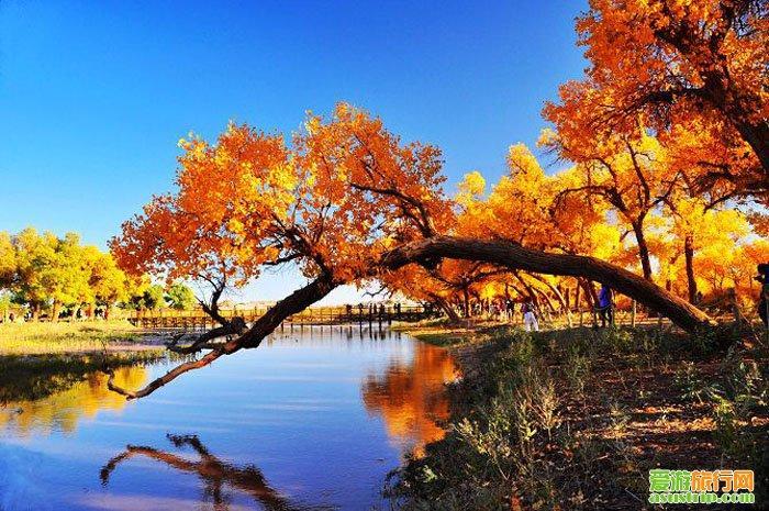 额济纳旗胡杨林图片 胡杨林景区 甘肃胡杨林在哪里 蒙古胡杨树