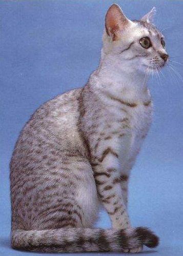 动物的埃及图腾