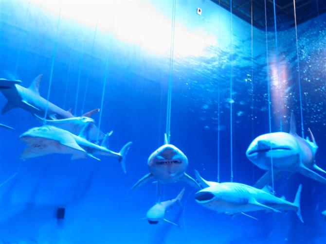 壁纸 动物 海底 海底世界 海洋馆 水族馆 鱼 鱼类 670_502