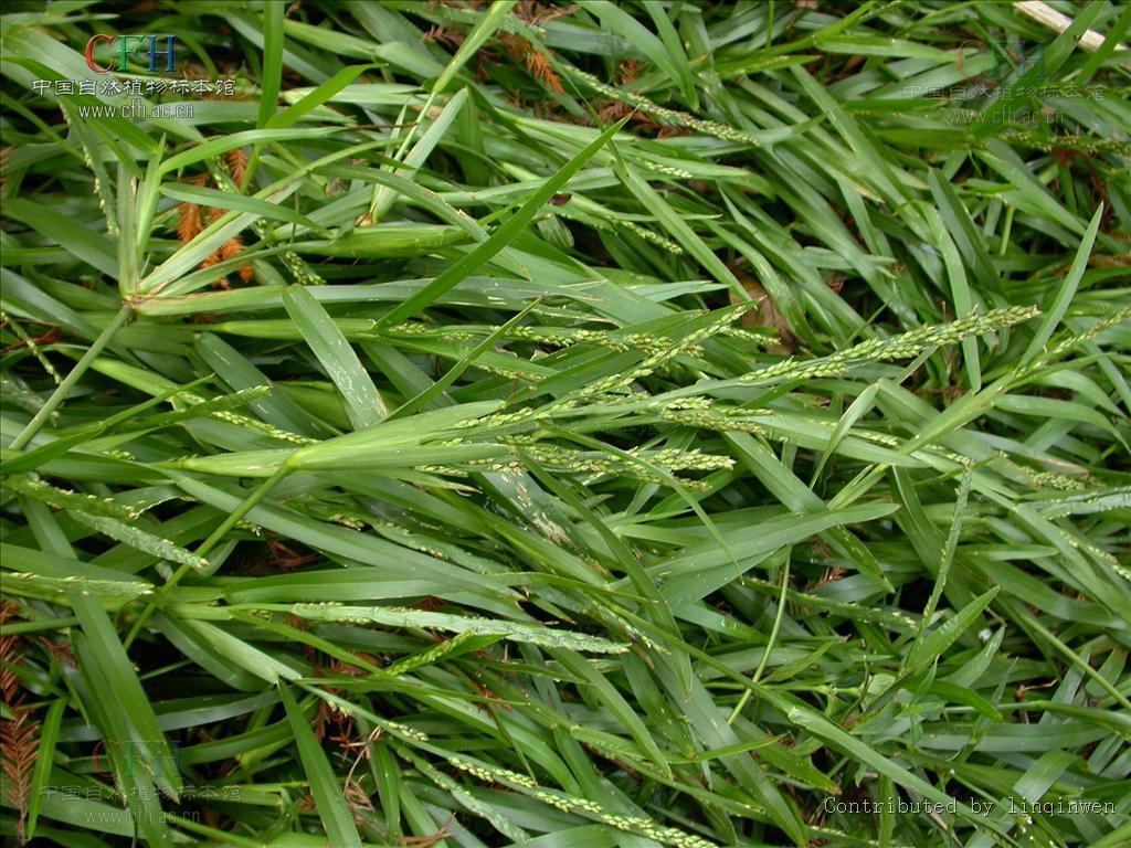 植物根茎叶结构模式图