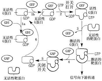 从生命结构层次看,细胞生物学位于分子生物学与发育
