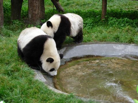 四川大熊猫栖息地