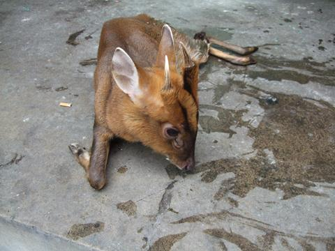 我不知道人们在动物不足以威胁人类生命的时候,为什么对动物的追杀