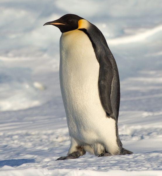 QQ企鹅动态头像请求高手PS高手把它倒立高清图片