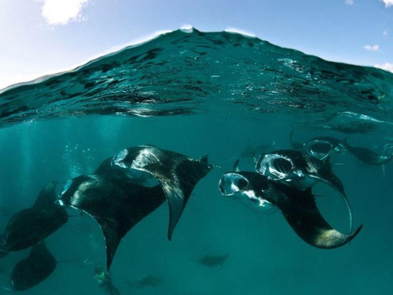 壁纸 动物 海洋动物 桌面 800_600