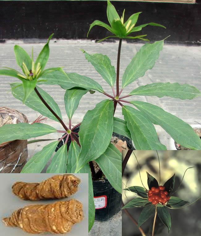 背景 壁纸 绿色 绿叶 盆景 盆栽 树叶 植物 桌面 650_763