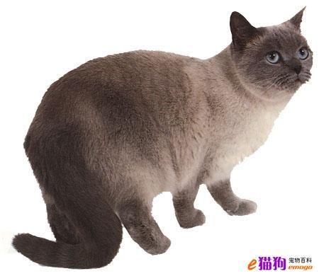 猫肠子结构图