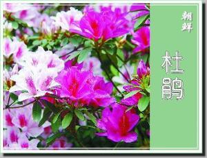 亚洲各国国花,区花
