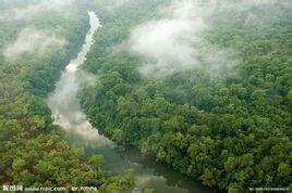 最大的森林生态系统图片
