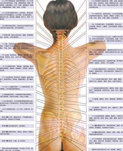 腰椎图片位置示意图-脊椎 搜狗百科