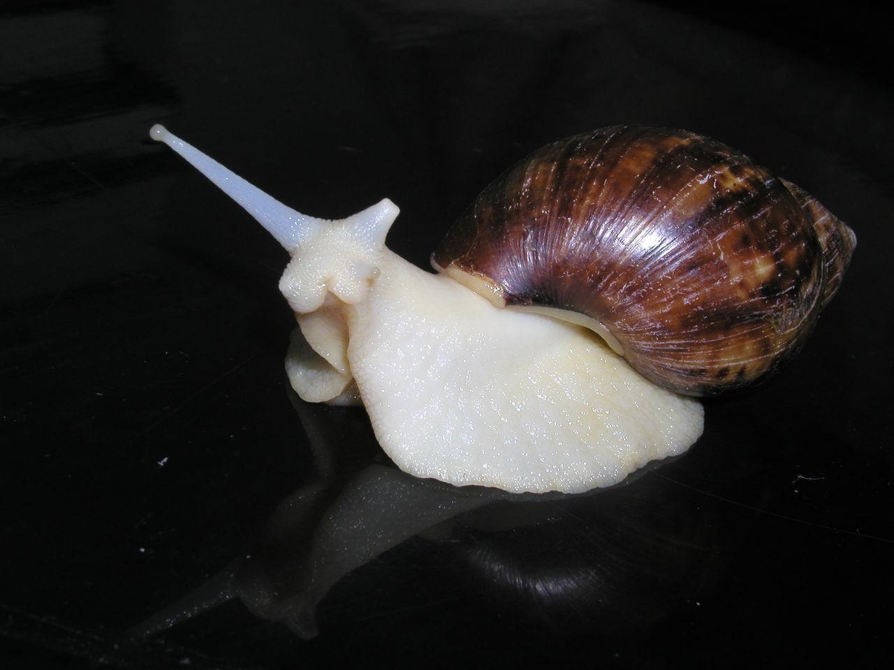 蜗牛吃食红外透视结构