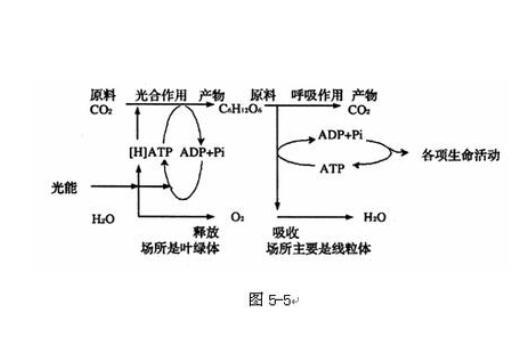 有机物的分解利用呼吸作用教案示例图片