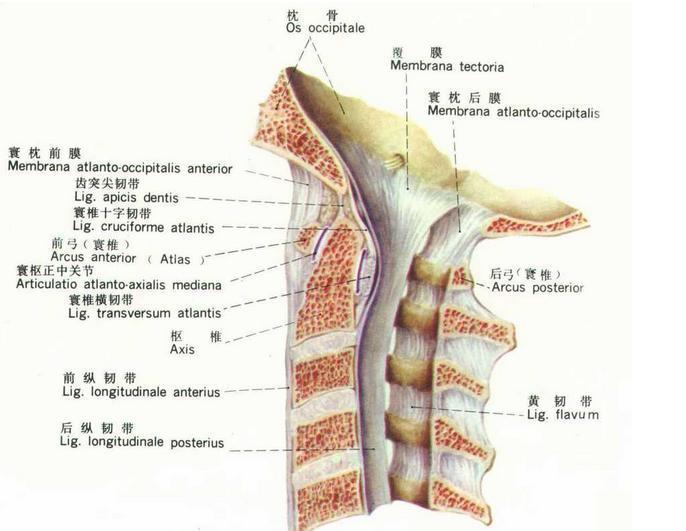 颈椎后路手术图解