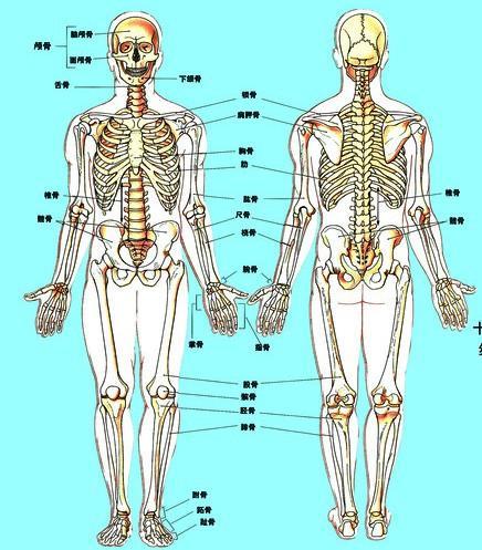 人体结构 搜狗百科