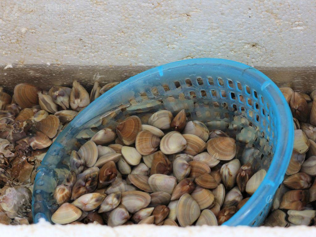本义:春天采吃的一种软体贝壳动物.