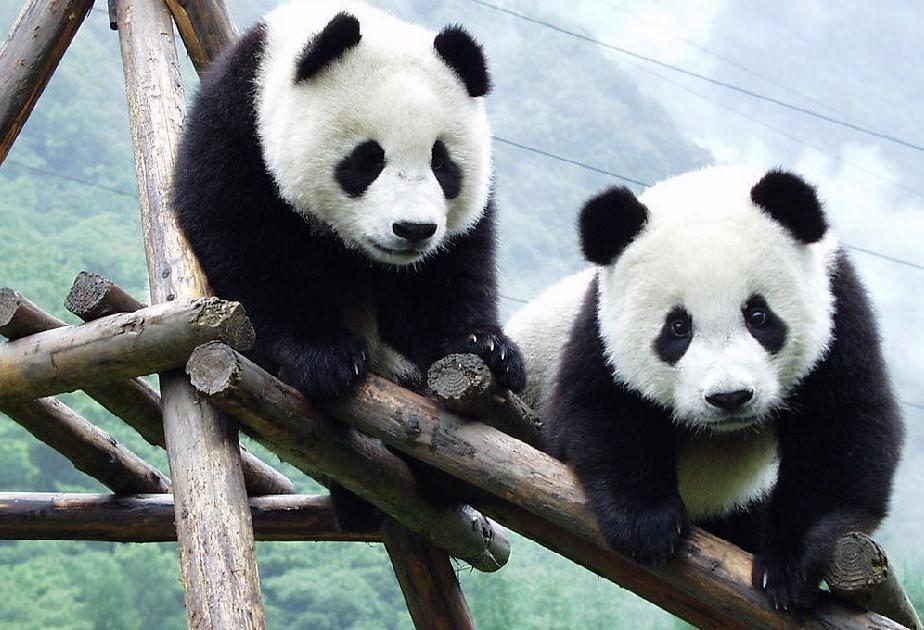 四川有的动物图片