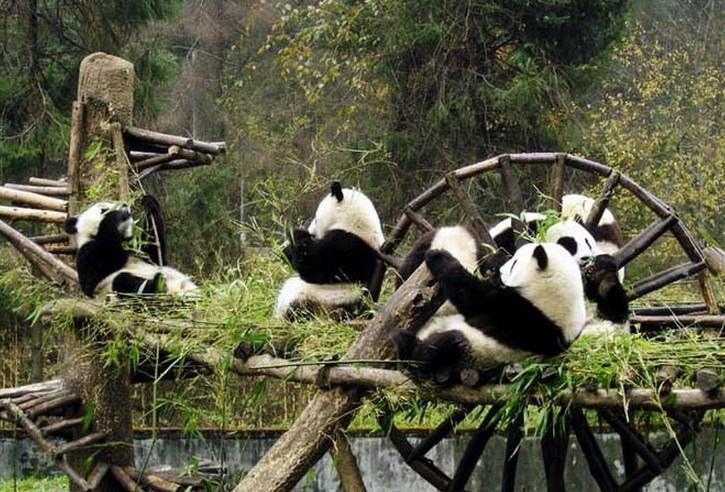哺乳动物 猫 大熊猫 栖息地_哺乳动物 猫 大熊猫 栖息地