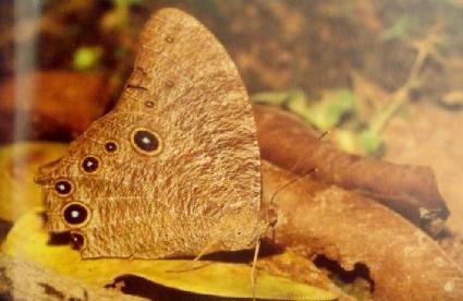 动物保护色 - 快乐小屋 - 梦的翅膀