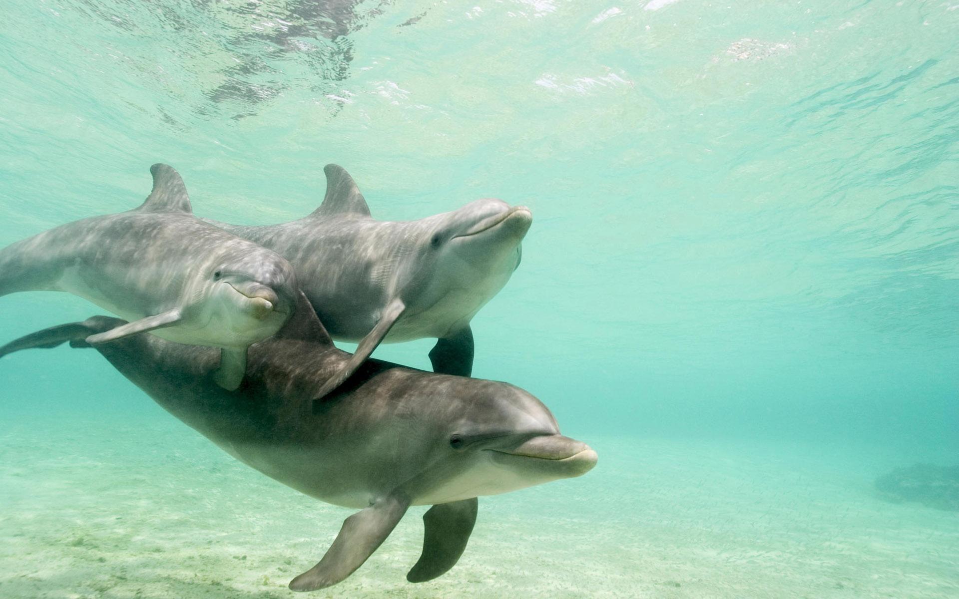 海豚粘土作品教程图解