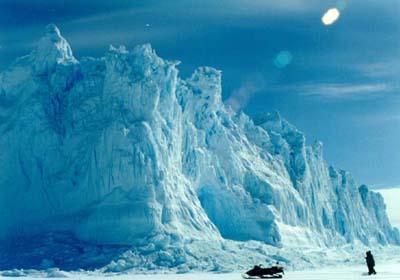 南极植物手抄报