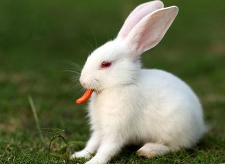 兔子不开心可爱图片