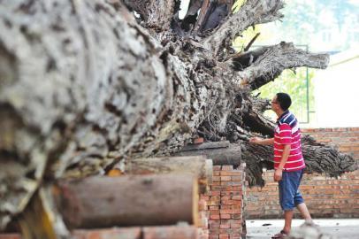 """[1]现在木材市场上一般所称的""""乌木""""是指黑色非洲乌木,它是树木树种"""