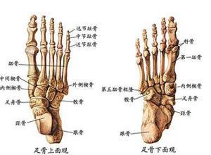 掌骨和跖骨短