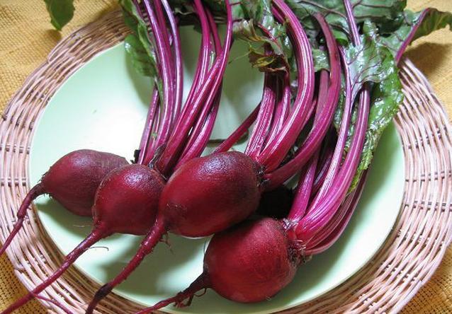 甜菜施用有机肥的种植技术