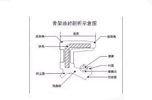 结构_骨架油封结构剖析示意图