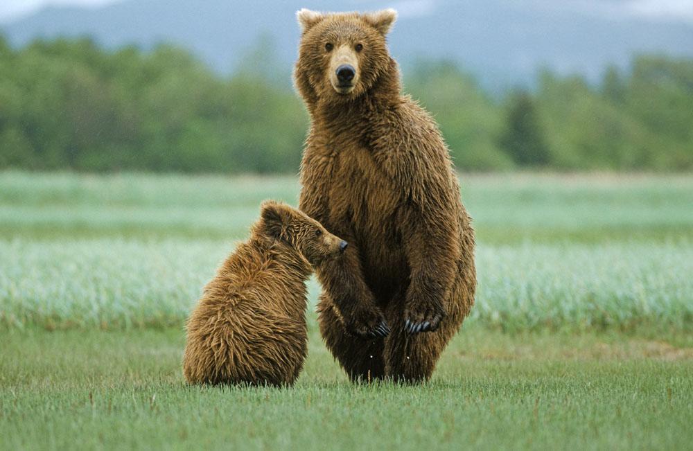 超轻粘土做可爱棕熊