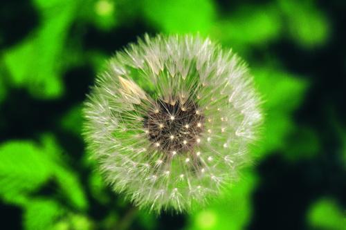 种子植物 - 搜狗百科