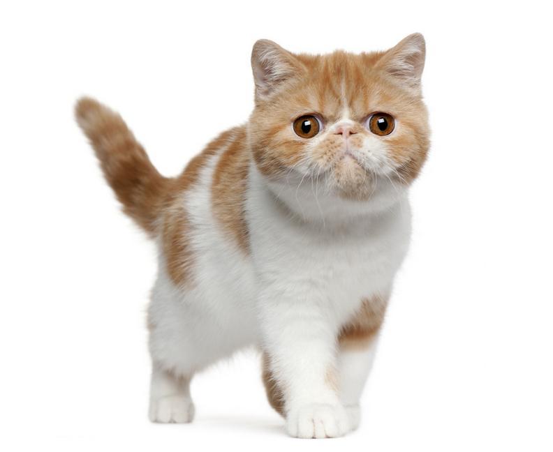 日韩手绘亡灵猫
