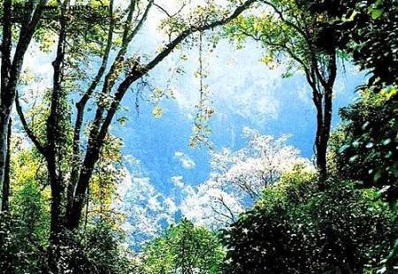 贵阳森林公园图片