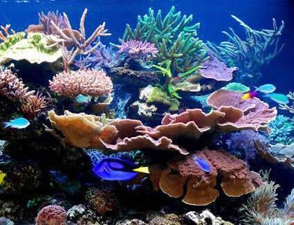 海洋博物馆图片
