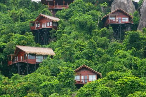 热带森林公园图片