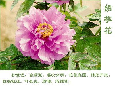 绿色桃花古代美女手绘