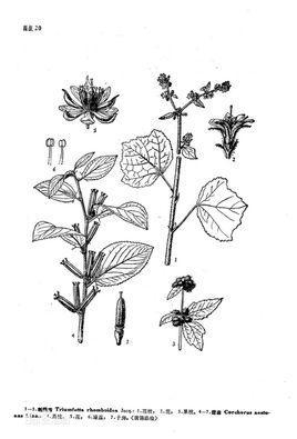 山坡植物平面图手绘