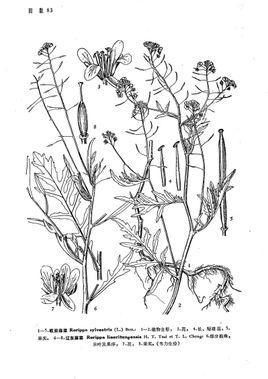 湿地植物手绘线稿
