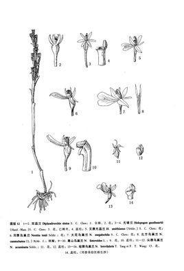 鸟巢铅笔手绘稿