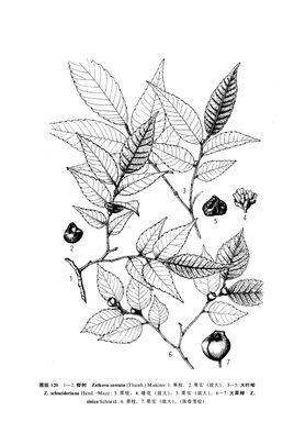 大叶绿植手绘图片素材