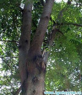 树轴对称图形剪纸步骤