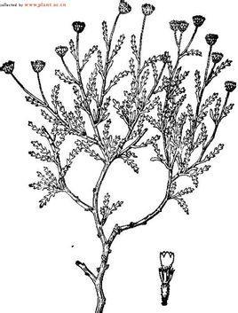 灌木手绘线稿高清